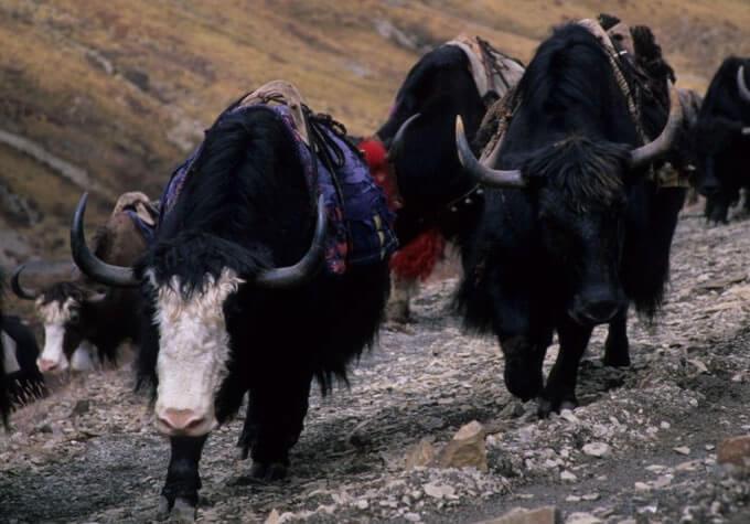 Groepsreis Bhutan – Troon der Goden9