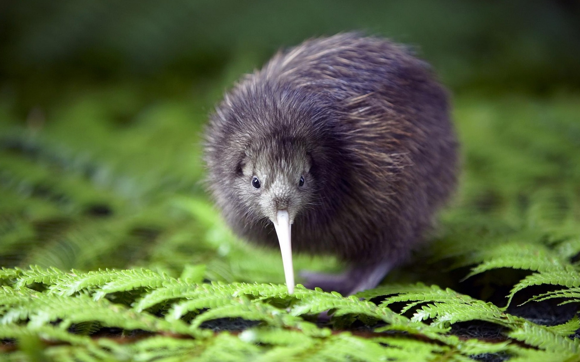 Nieuw Zeeland reis – Kiwi adventure.7