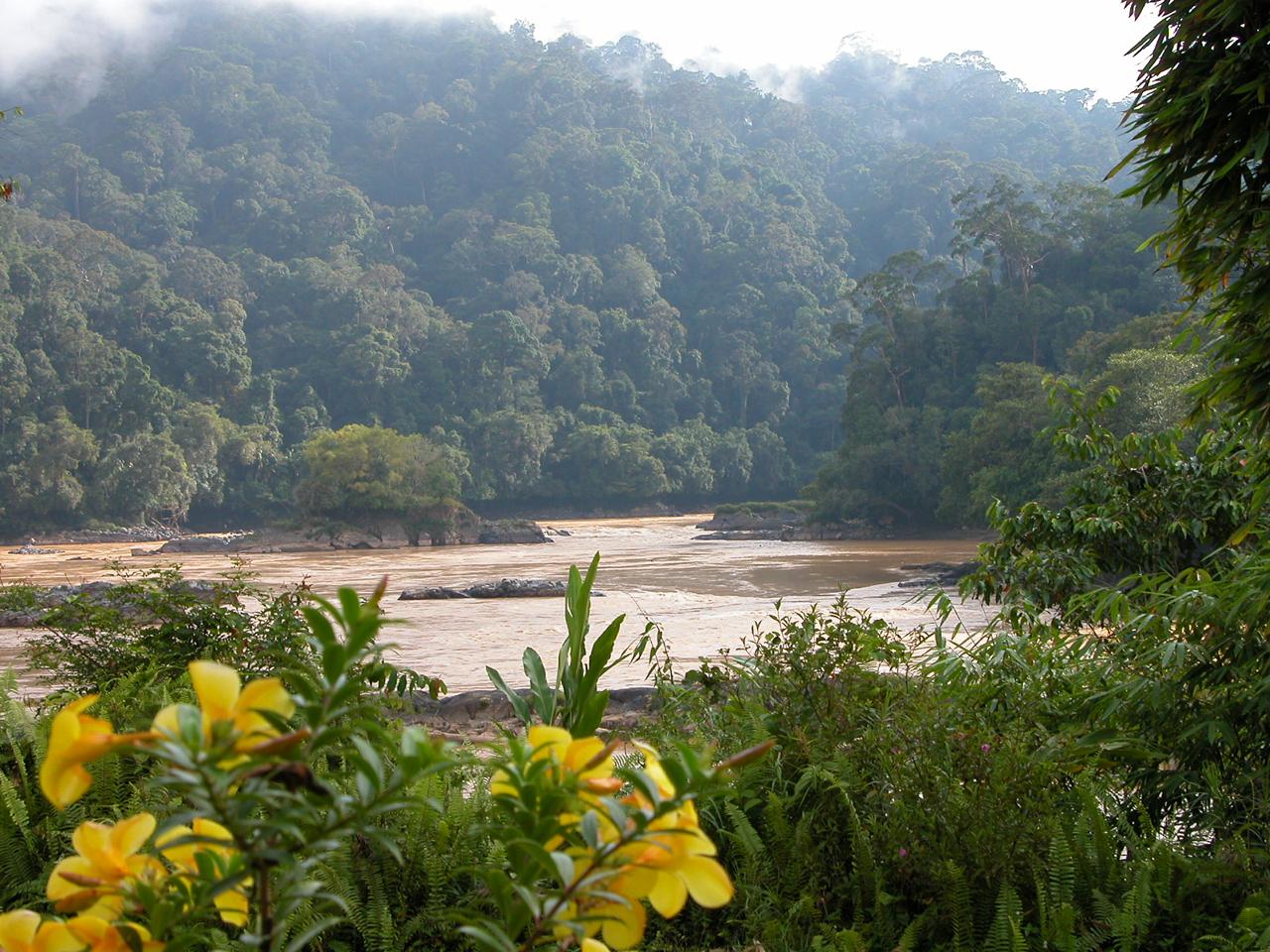Maleisië, zicht op de Rajan rivier - Sarawak