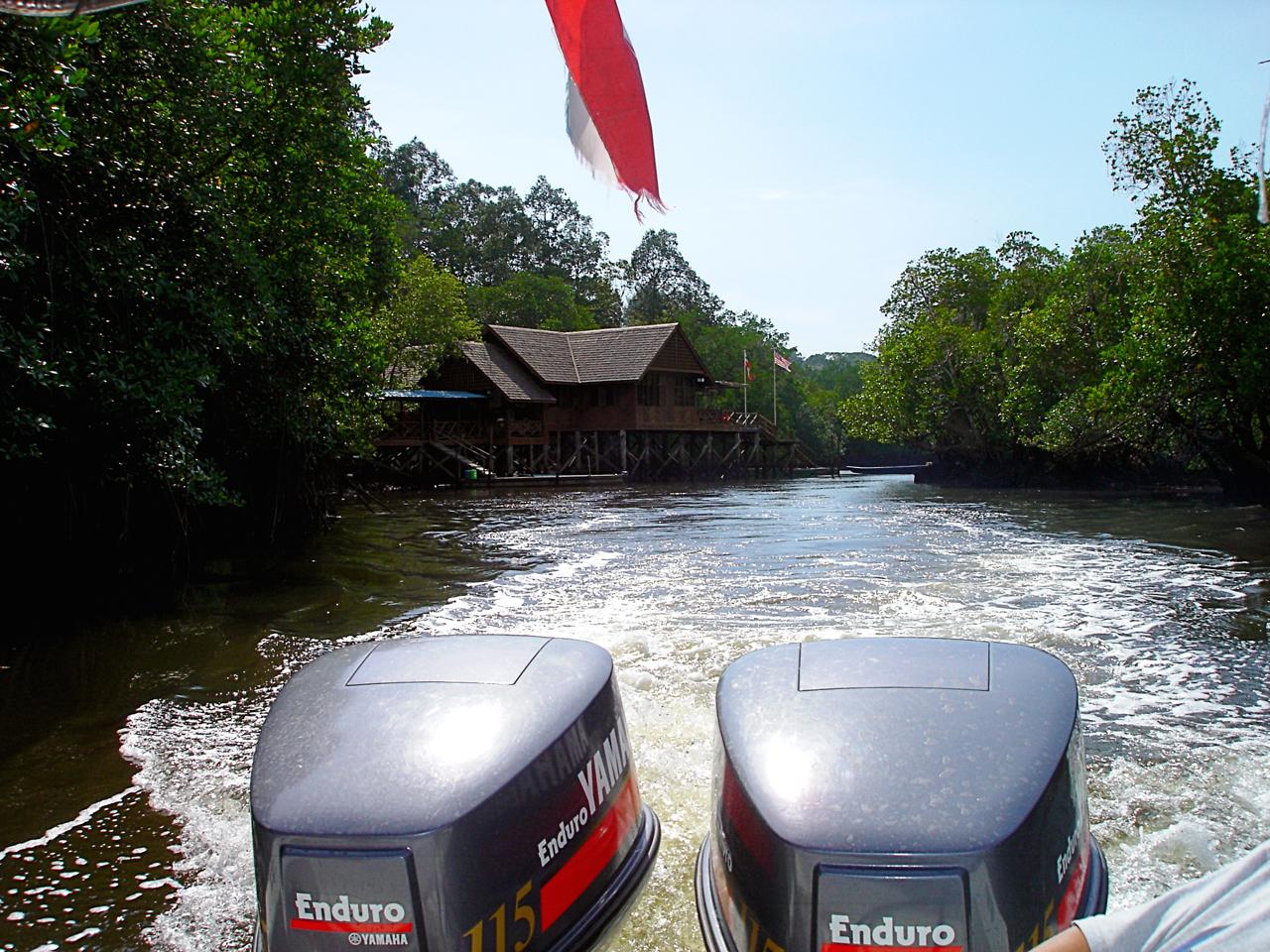 Maleisië, tocht in Sandakan om de Orang Utans te zien - Sabah