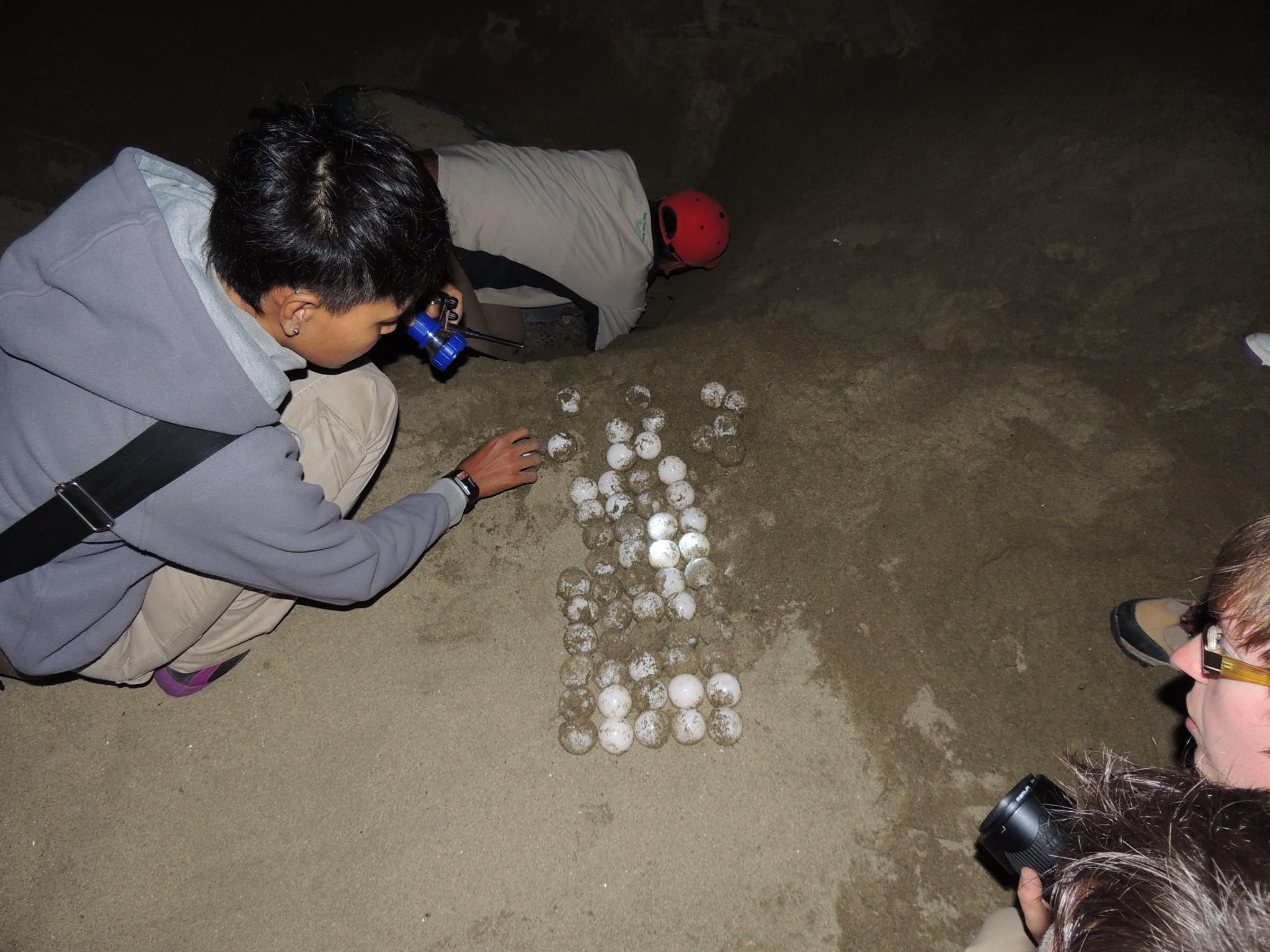 Indonesië, schilpadden op het strand van Sukamade - Oost Java