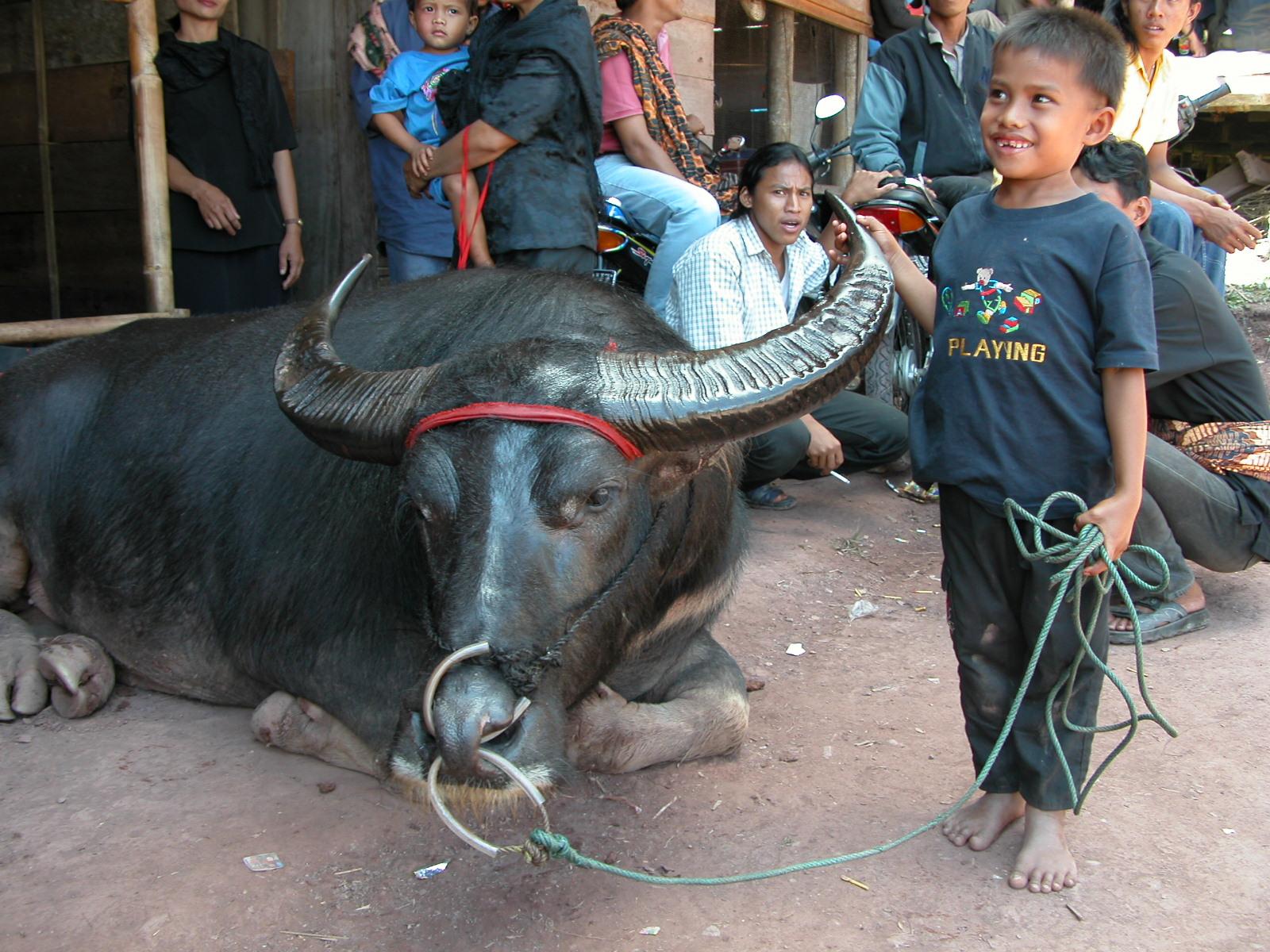Indonesië, omgeving van Rantepao - begrafenisfeest, Sulawesi