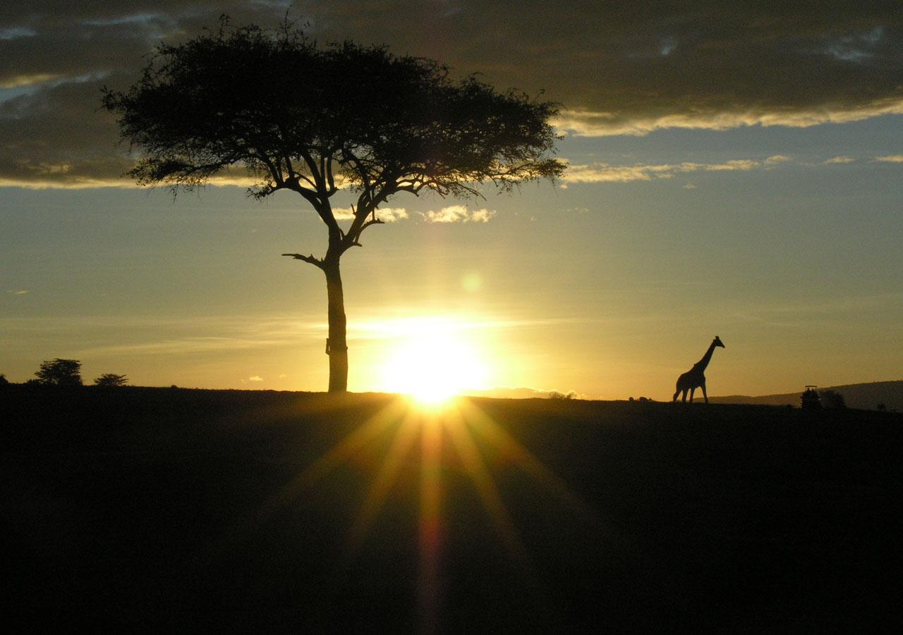 Kenia, avondlicht in Masai Mara N.