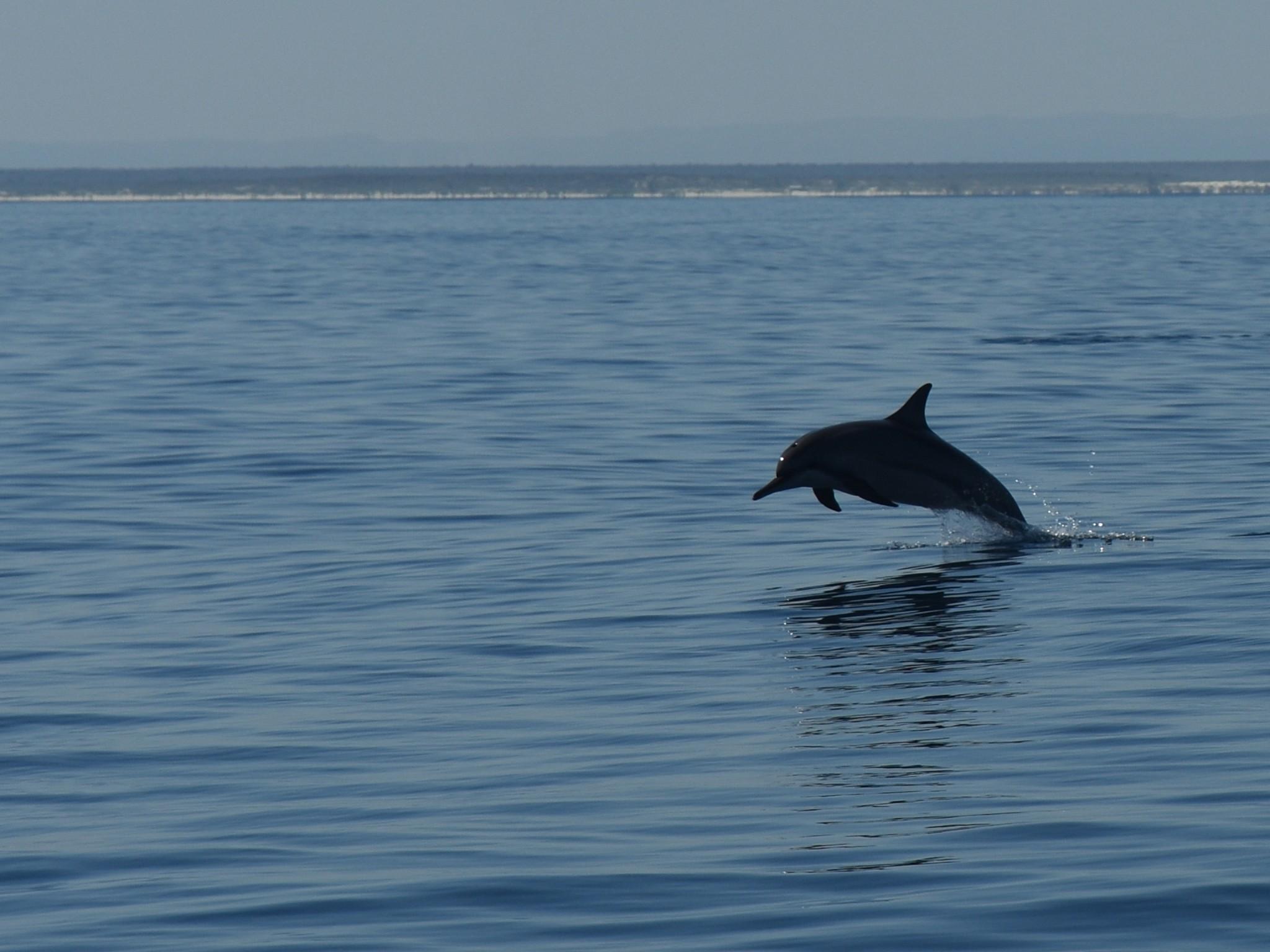 Madagascar, Dolfijnen voor de kust van Mikea