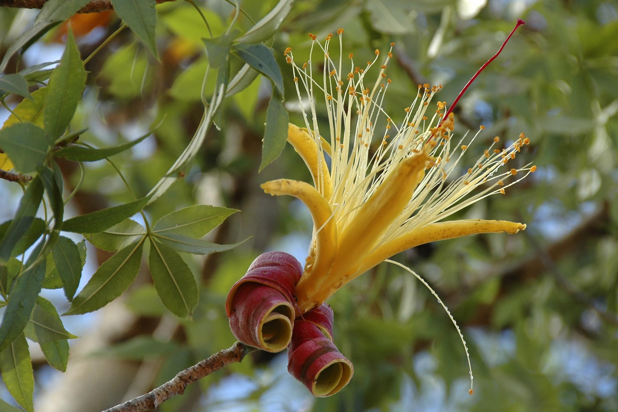 Madagascar, Een van de vele bloemen die op Madagascar voorkomen.