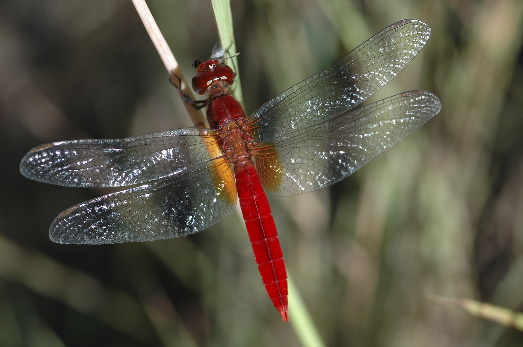 Madagascar, in het regenwoud van Ranomafana