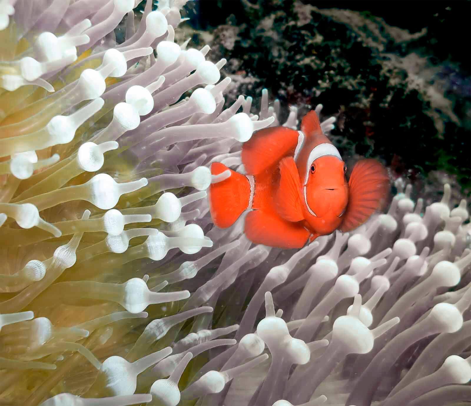 Papoea Nieuw Guinea Duiken – Paradise Diving4