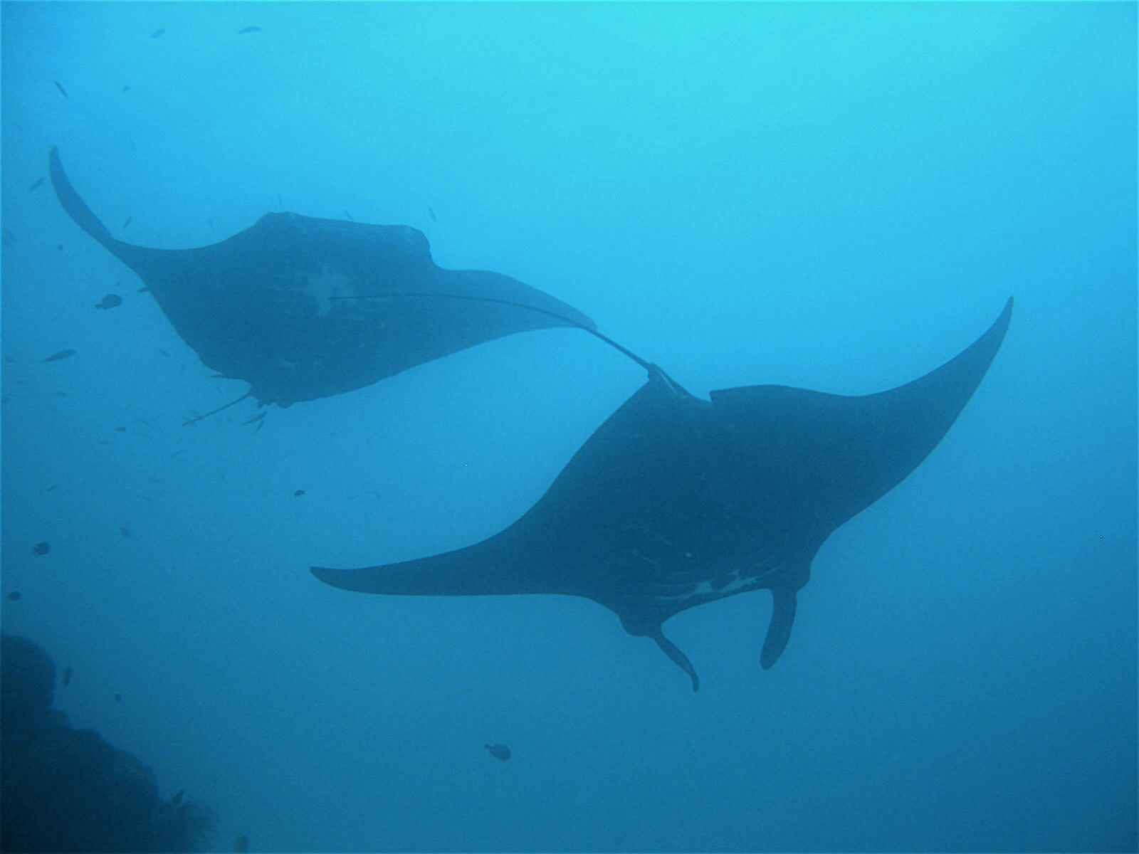 Papoea Nieuw Guinea Duiken – Paradise Diving3