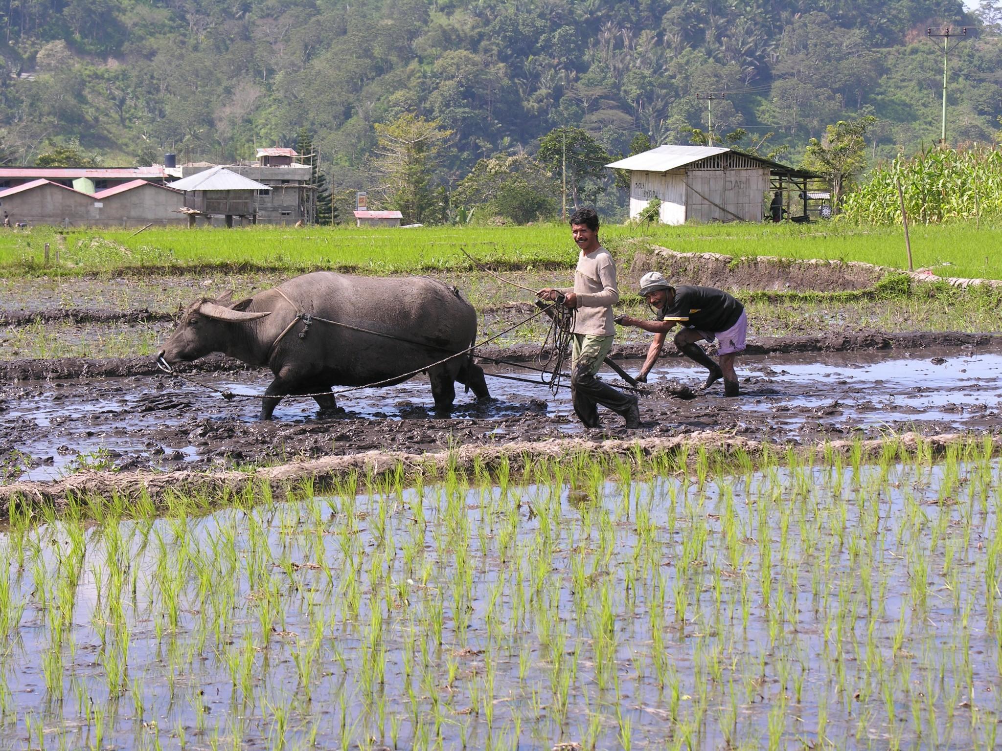 GROEPSREIS INDONESIE : KLEINE SUNDA – EILAND17