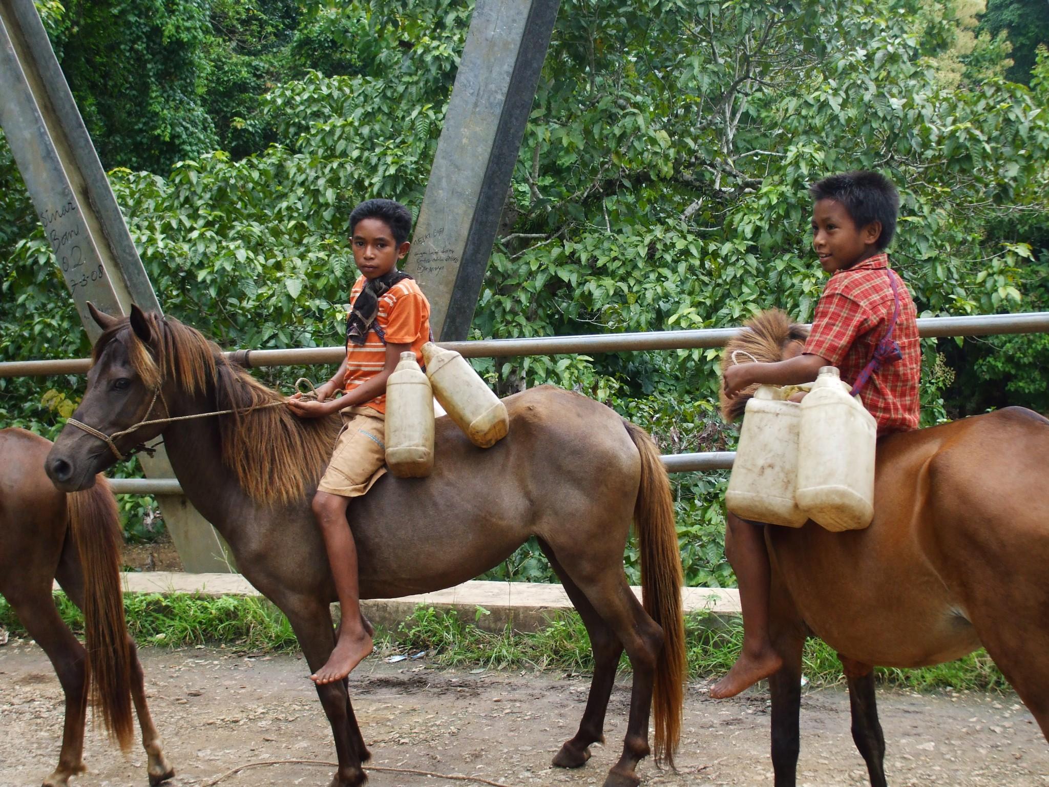 GROEPSREIS INDONESIE : KLEINE SUNDA – EILAND8